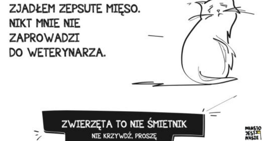 Miejscy Aktywiści Mówią O Dokarmianiu Zwierząt Warszawa