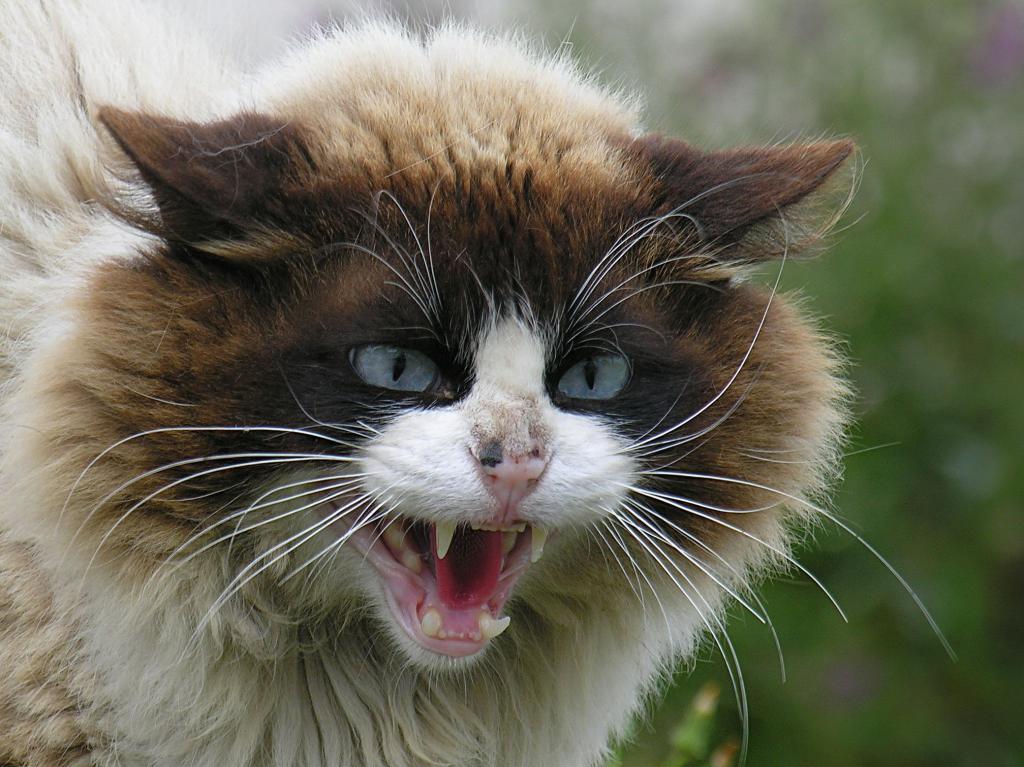 Międzynarodowa Wystawa Kotów Rasowych – już w ten weekend!